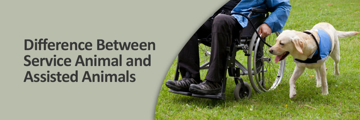 Difference Between Service Animal and Assisted Animal