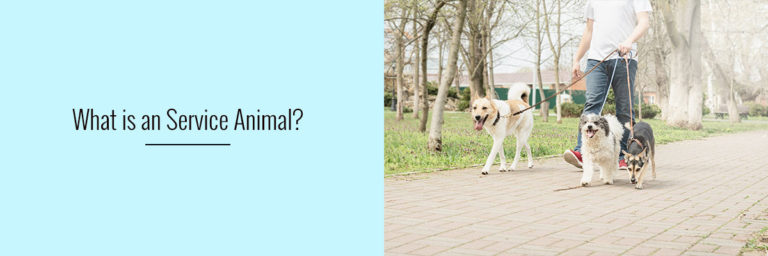 What-is-a-Service-Animal